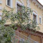 Myrsine residences, your home in Sardinia, garden, olive