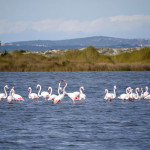 Sardinia landscape on the salt lake with pink flamingos near Myrsine residences