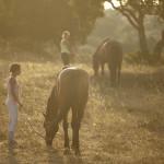 Landscape - Horses