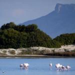 Sardinia landscape on the salt lake with pink flamingos near Myrsine residences