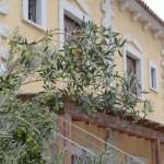 Residenze Myrsine, La tua casa in sardegna, giardino, ulivo