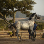 Residenze Myrsine - cavalli e paesaggio