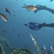 """Diving: immersione alla scoperta del relitto """"CHRISSO"""""""